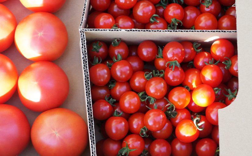 トマトボックスはじめます!