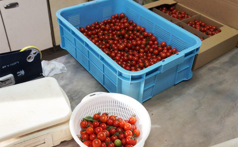 トマトボックスは終了